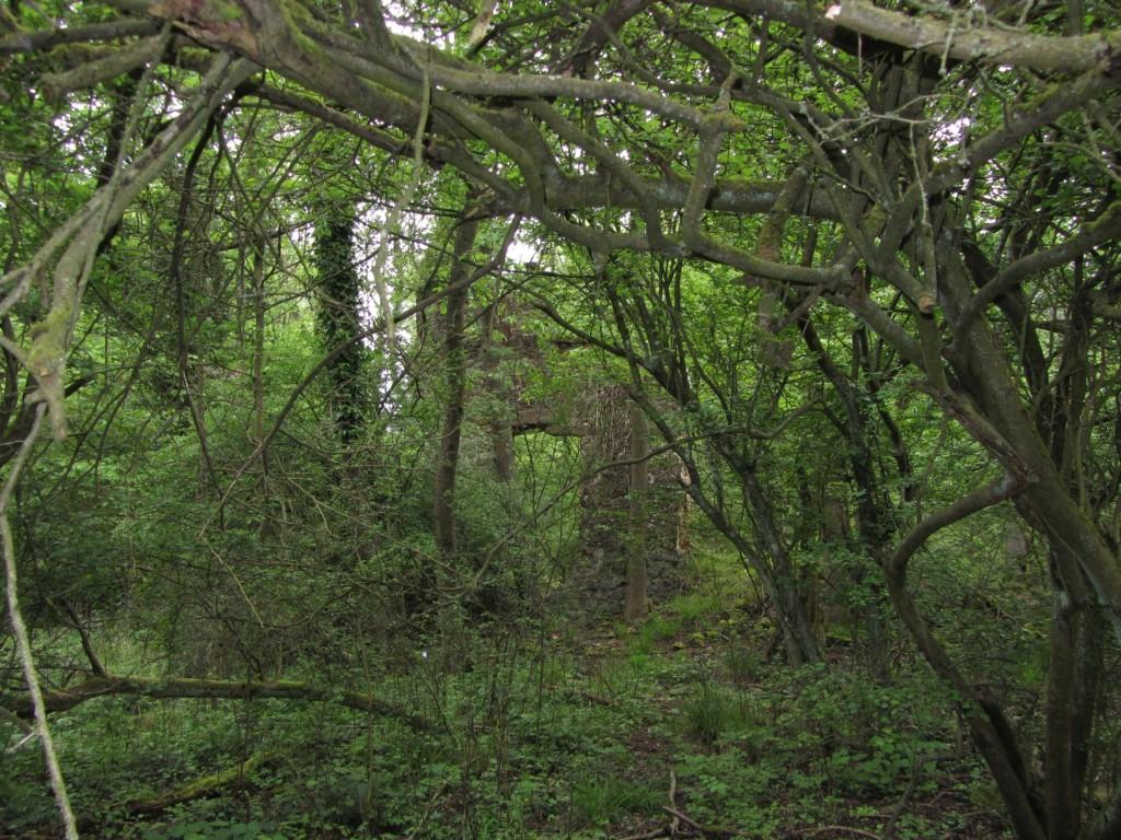 Eine Entdeckung im Unterholz nahe des Wanderweges.