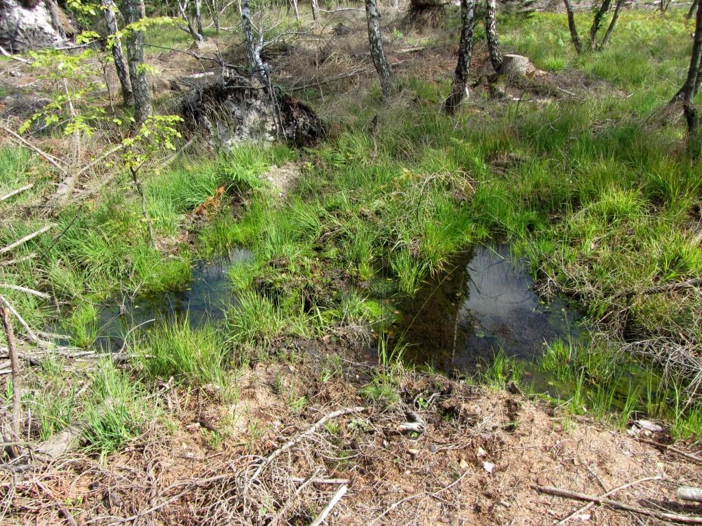 Inmitten einer Unterholzfläche fand sich exakt auf dem RV-Punkt die Quelle eines Baches.