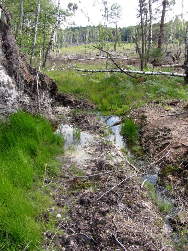 Weitere Ansicht der Quelle, mit der großen, abgeforsteten Fläche drumherum.