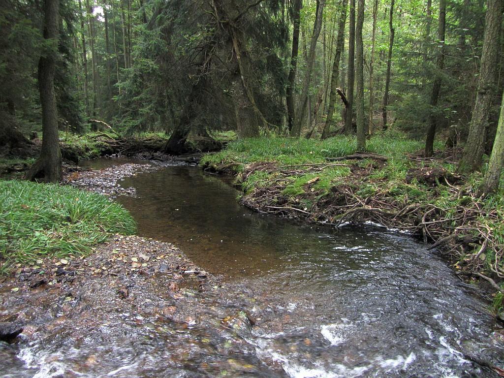 Ebenfalls ein erstaunlicher Volltreffer: Ungewöhnlich tiefe Bachstelle (~2,5m) im ansonsten knöcheltiefen und offenen Bachlauf.