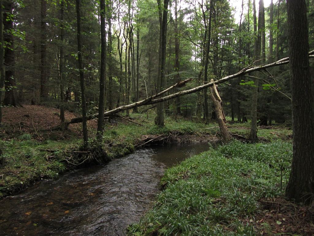 Überspannt wird die Stelle von einem Baumstammbogen (offenbar Biberwerk).