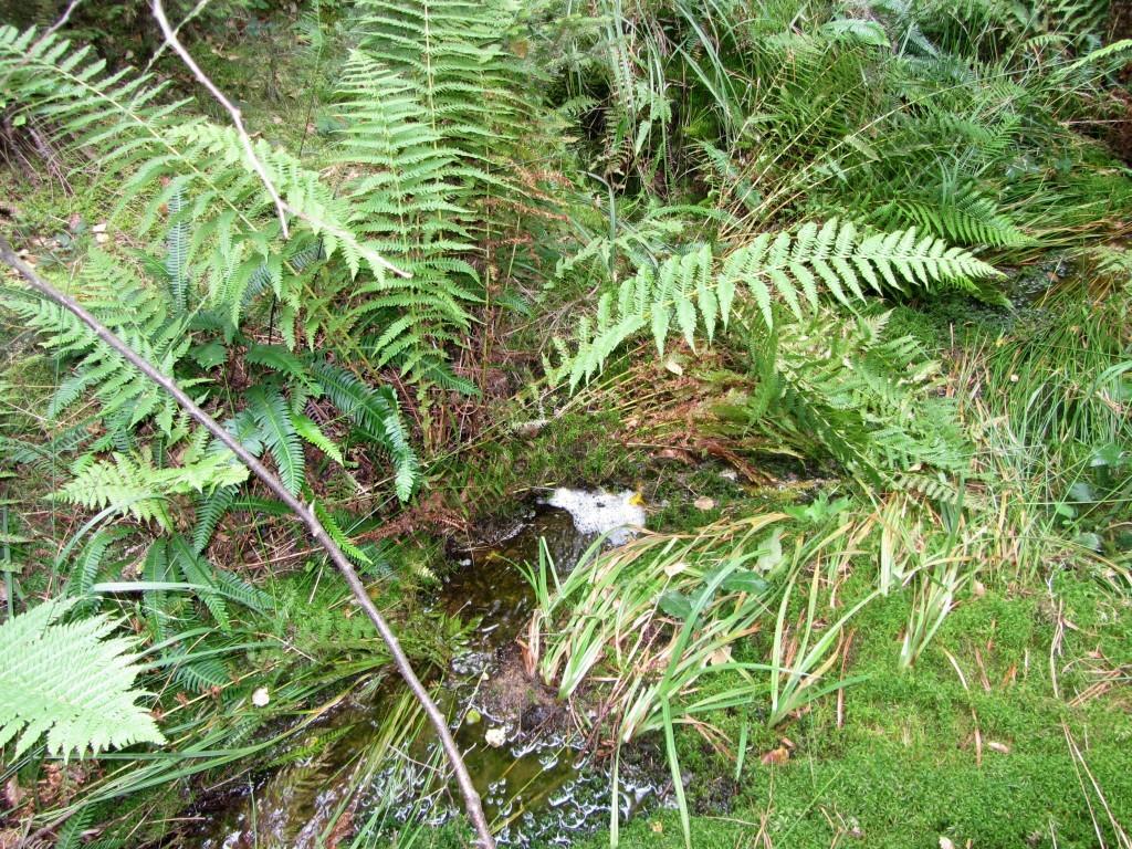 Der schwächste RV-Treffer, aber zumindest ein Bächlein mitten im Unterholz. Auch dort drumherum nur trockener Waldboden im Umkreis von 200-300m.